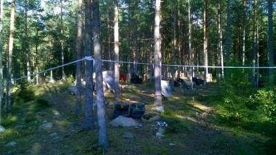 Sorrinsuon metsäkenttä